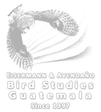 Eisermann and Avendaño Bird Studies Guatemala